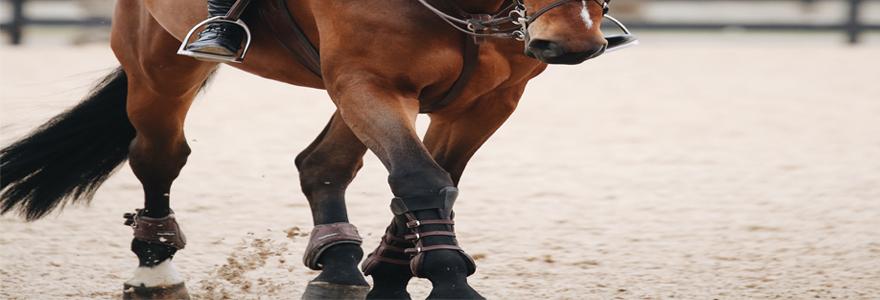 Bien protéger les membres du cheval